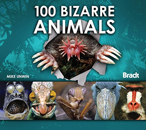 100 Bizarre Animals (Bradt Travel Guides (100 Animals)): Unwin, Mike