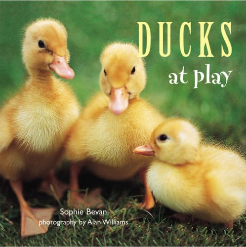 9781841728544: Ducks at Play