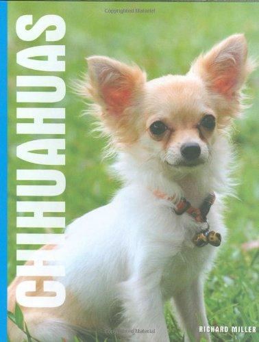 9781842861776: Chihuahuas - Interpet