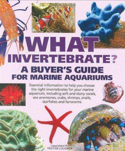 9781842861790: What Invertebrate?