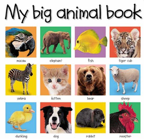 9781843320678: My Big Animal Book (My Big Board Books)