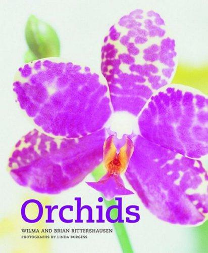 9781844004294: Orchids