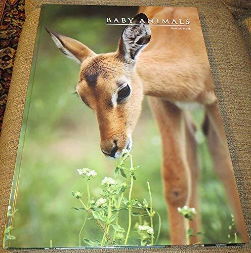 9781844060962: BABY ANIMALS