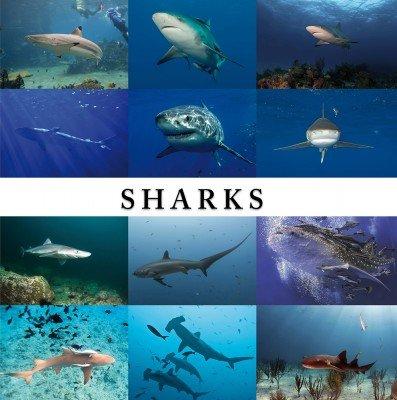 9781844063192: Sharks