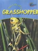 9781844433100: The Life Of A Grasshopper (Raintree Perspectives: Life Cycles)