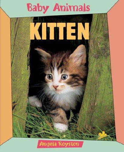 Kitten (Baby Animals): Royston, Angela