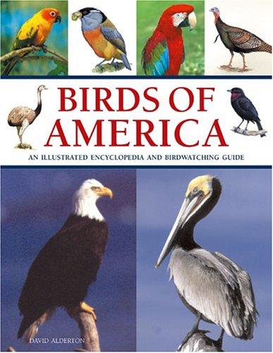Birds of America: Alderton, David