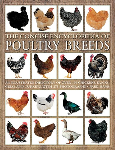 9781844760589: The Concise Encyclopedia of Poultry Breeds: An Illustrated Directory Of Over 100 Chickens, Ducks, Geese And Turkeys, With 275 Photographs