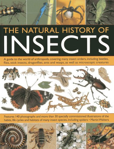 Natural History Of Insects : A Guide: Martin Walters