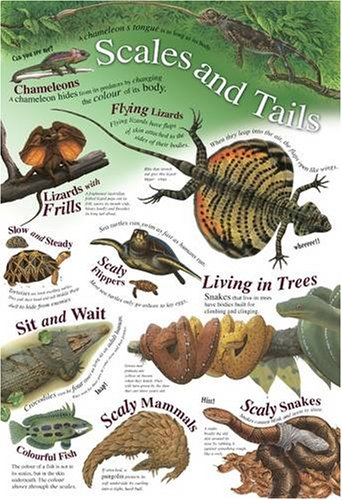 9781845316525: Scales and Tails (Natural History Wallchart)