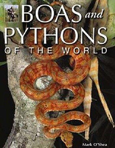 9781845375447: Boas and Pythons of the World