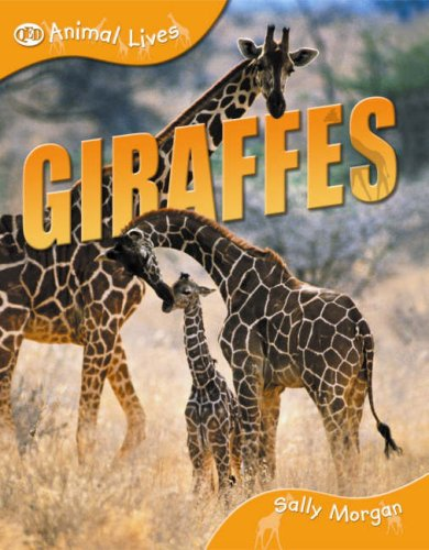 9781845386955: Giraffes (QED Animal Lives S.)