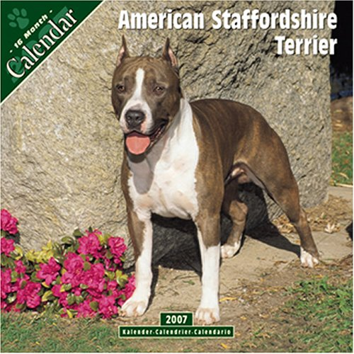 9781846620072: American Staffordshire Terrier 2007 Wall Calendar