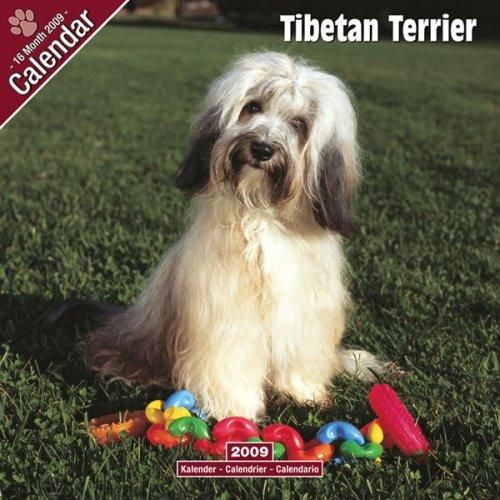 9781846627118: 2009 Tibetan Terrier Wall Calendar