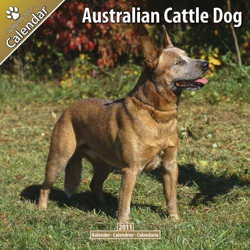 9781846628672: Australian Cattle Dog 2011 Wall Calendar #10008-11