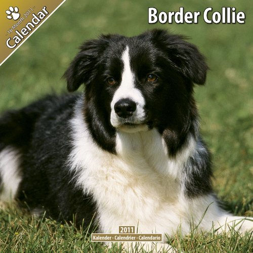 9781846628788: Border Collie