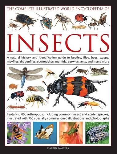 9781846813566 The Complete Ilrated World Encyclopedia Of Insects A Natural History And Identification Guide