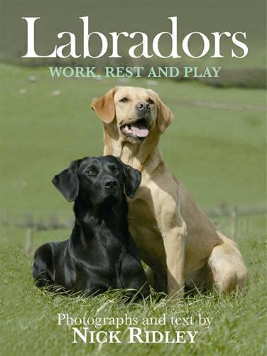 9781846890499: Labradors: Work, Rest and Play