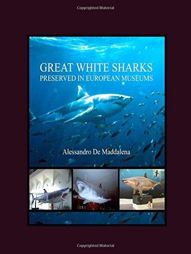 9781847181893: Great White Sharks Preserved in European Museums