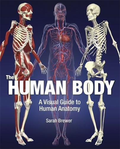 9781847244741: The Human Body: A Visual Guide to Human Anatomy