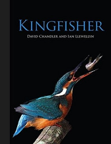 Kingfisher: Chandler, David