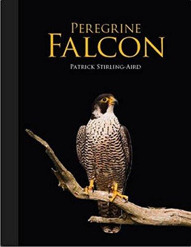 9781847737694: Peregrine Falcon