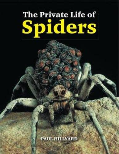 9781847738738: Private Life of Spiders