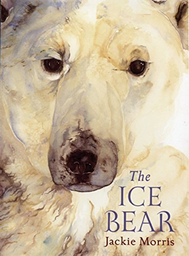 9781847804570: The Ice Bear