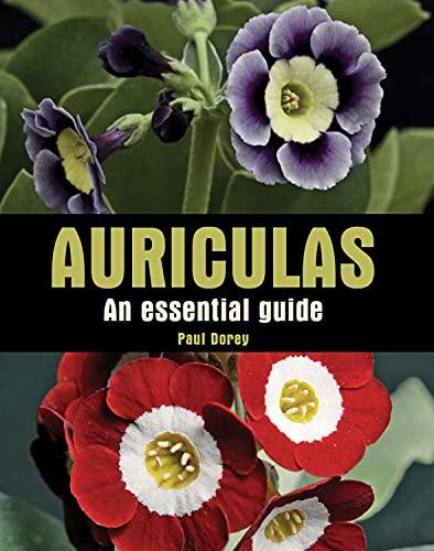 Auriculas: An Essential Guide: Dorey, Paul