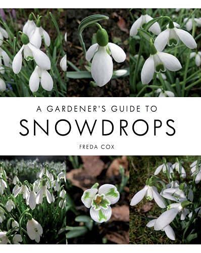 A Gardener's Guide to Snowdrops: Cox, Freda