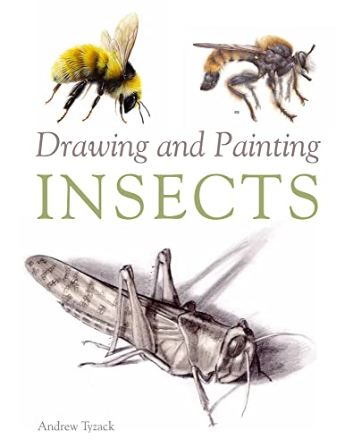 Drawing and Painting Insects.
