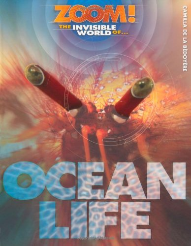 9781848355682: Zoom! The Invisible World of Ocean Life