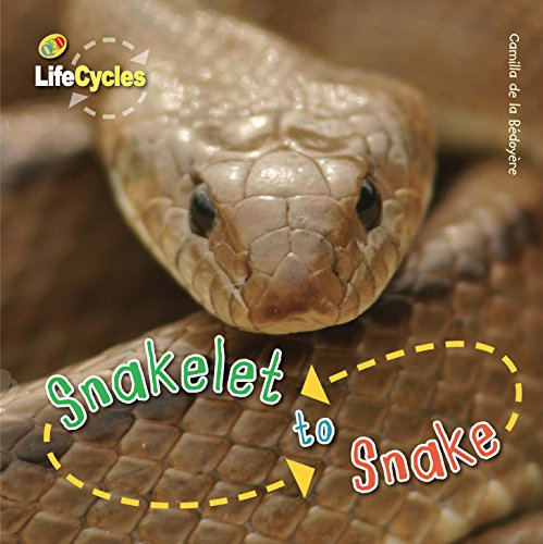 9781848355811: Life Cycles: Snakelet to Snake