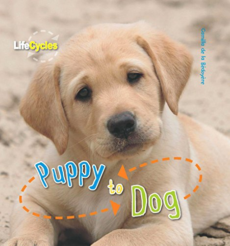 9781848355828: Life Cycles: Puppy to Dog