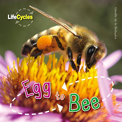 Life Cycles: Egg to Bee: de le B�doy�re, Camilla