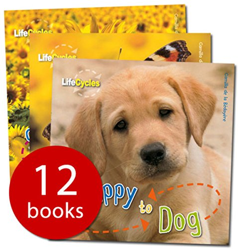 9781848356924: Life Cycles Collection - 12 Books (Paperback)