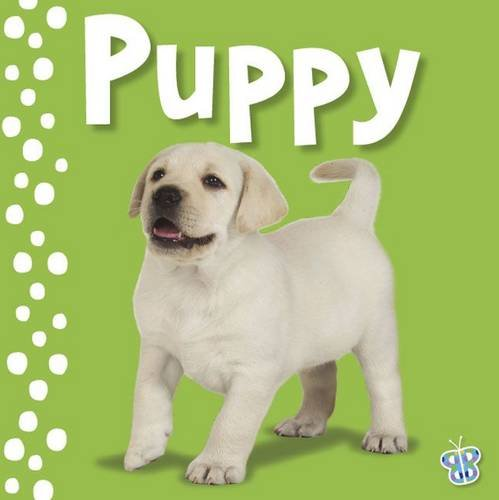 9781848793545: Touch and Feel Puppy (Busy Baby)