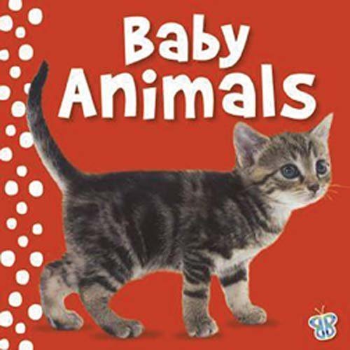 Baby Animals (Busy Baby): Mark Richards