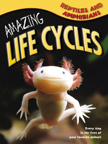 Reptiles & Amphibians (Amazing Life Cycles): Williams, Brian