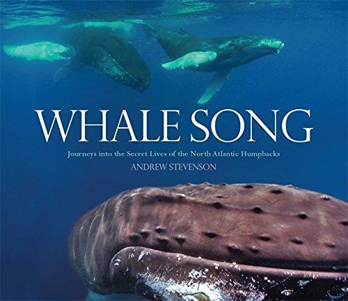 Whale Song: Journeys Into the Secret Lives of the North Atlantic Humpbacks: Stevenson, Andrew