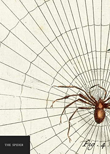 9781849497466: Natural History Museum: The Spider notebook