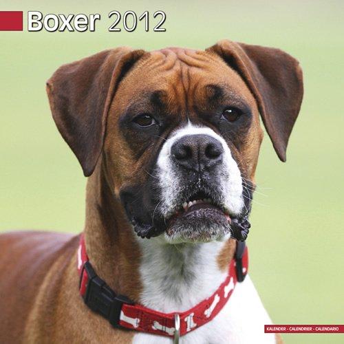 9781849812818: Boxer Euro Calendar 2012
