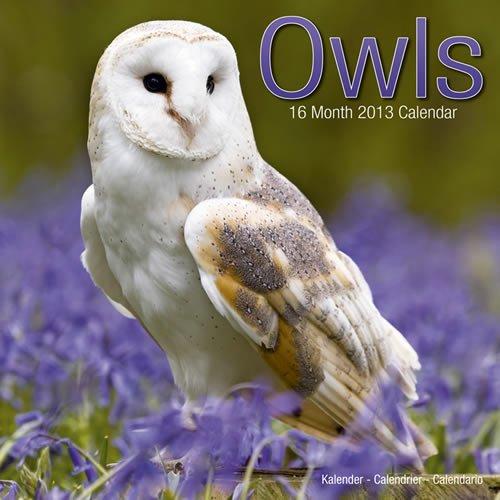 9781849815246: Owls 2013 Wall Calendar #30134-13