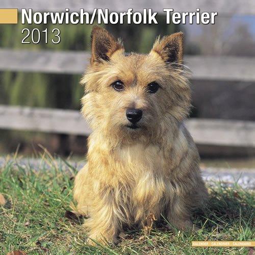 Norwich/Norfolk Terrier 2013 Wall Calendar #30486-13: Pet Prints