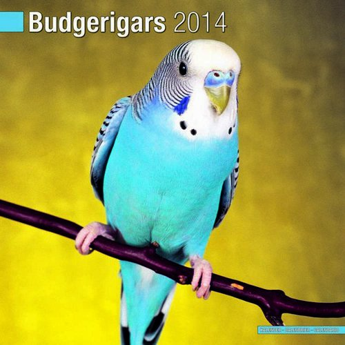 9781849819558: Budgerigars 2014 Wall Calendar