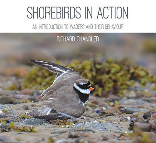 9781849953559: Shorebirds in Action: An Introduction to Waders and Their Behaviour