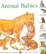 9781851033041: Animal Babies: Seasons (My First Discoveries)