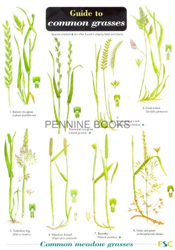 9781851532483: Guide to Common Grasses