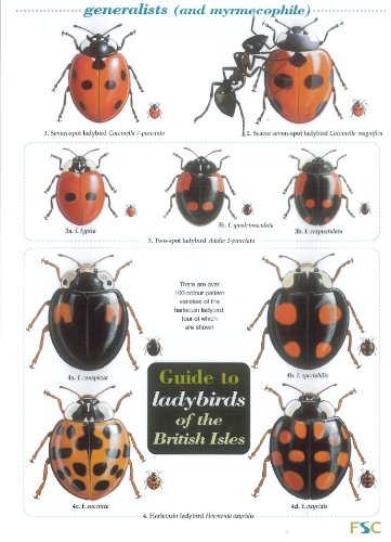 Guide to Ladybirds of the British Isles: Helen Roy, Michael Majerus, Remy Ware,