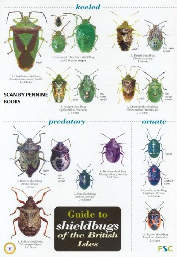 9781851538980: Guide to Shieldbugs of the British Isles